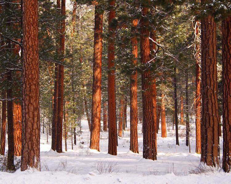 wponderosas-winter-ktk_MG_17.jpg