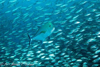 Bonaire Aug 2011