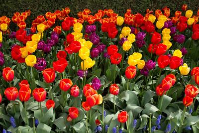 Tulips 2010