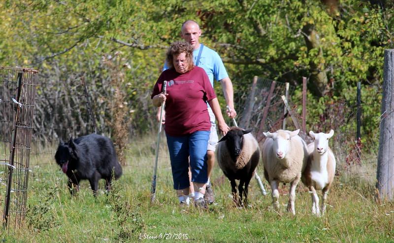 2015.9.27 Herding at Bonnies (62).JPG