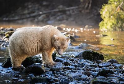 Great Bear Rainforest 2017