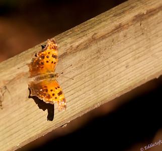 Butterflies Set 1