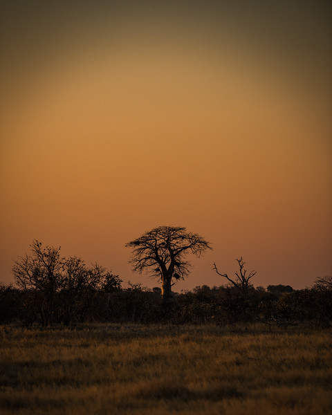 Botswana_June_2017 (4923 of 6179).jpg