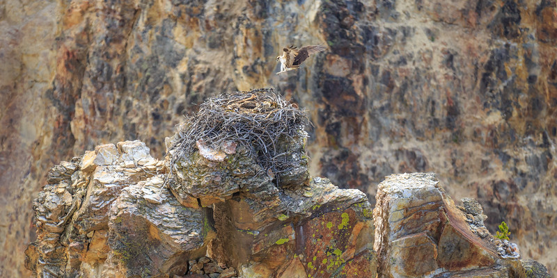 Grand Canyon of the Osprey Series - #6