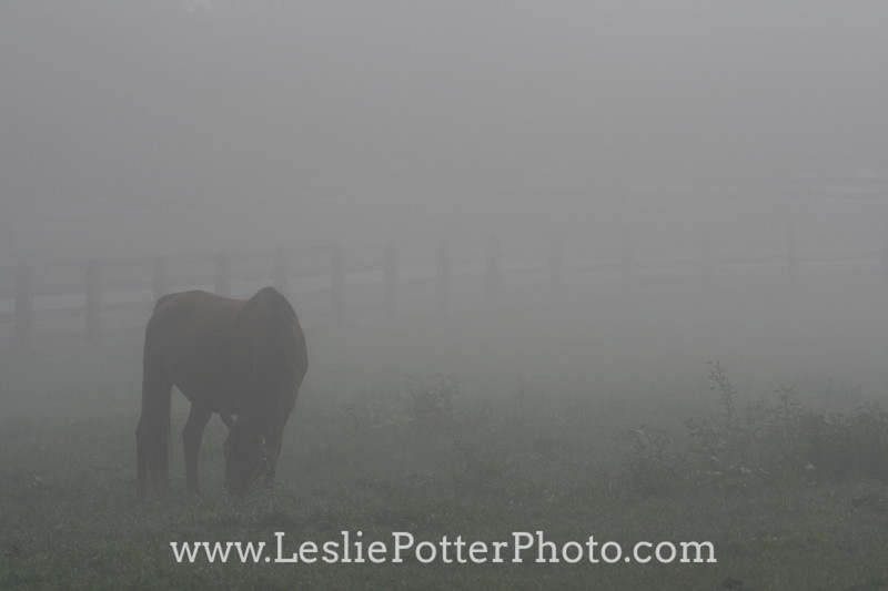 Silhouette of Horse Grazing in Fog