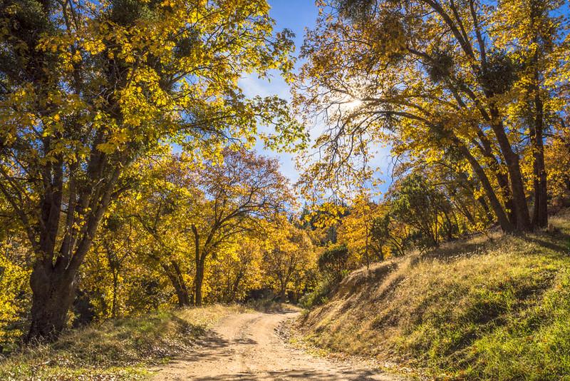 San_Bernardino_Mountains_Fall_Color_Trees_DSC3359.jpg
