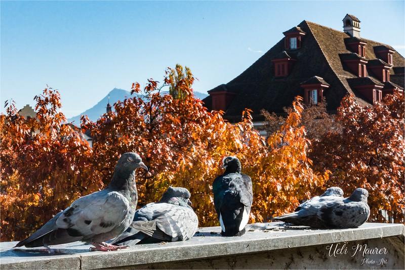2017-10-17 Luzern - DSC00691.jpg
