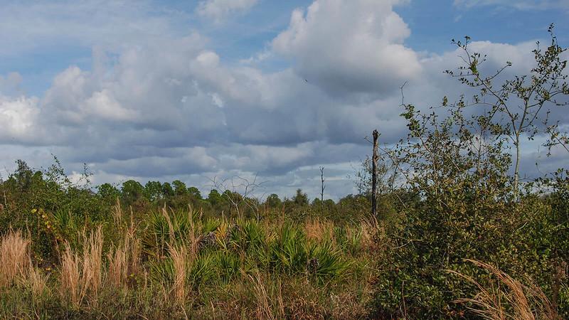 Tippecanoe II Mitigation Area