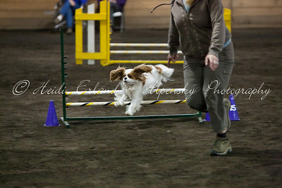 RAT ASCA - Jumpers Open Round 1 - 10/08/11