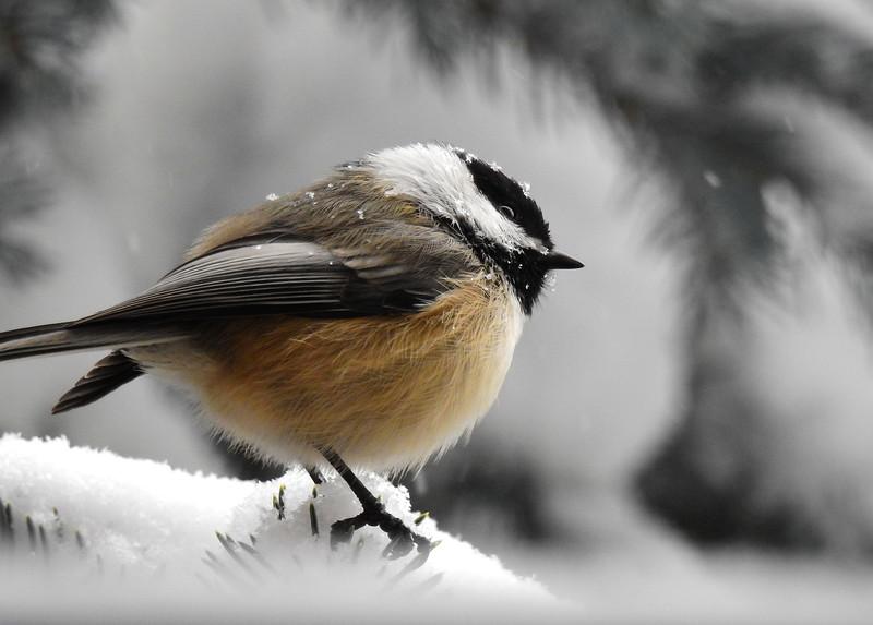 birds (226).JPG