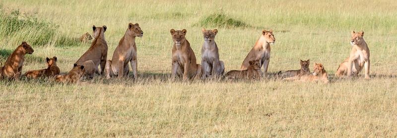 20160215__KT27109_Serengeti_Day_7.jpg