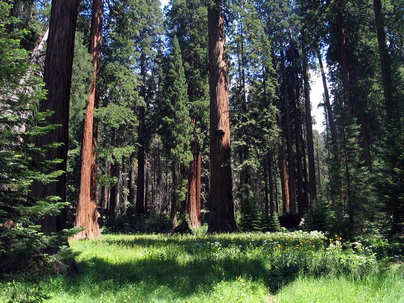 Giant Forest (5).jpg