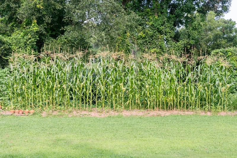 cmp Farm Chastain.jpg