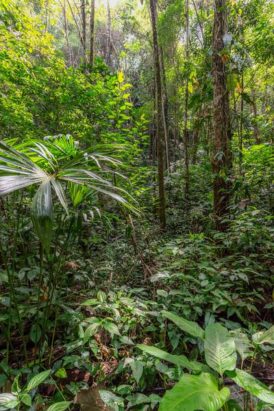 Rainforest near Nauyaca Falls