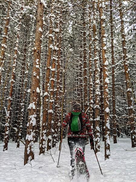 Ontario Winter Hikes - Pretty River Valley Provincial Park