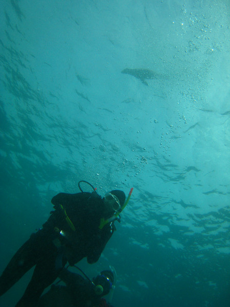 Diving in the Galapagos (293 of 392)