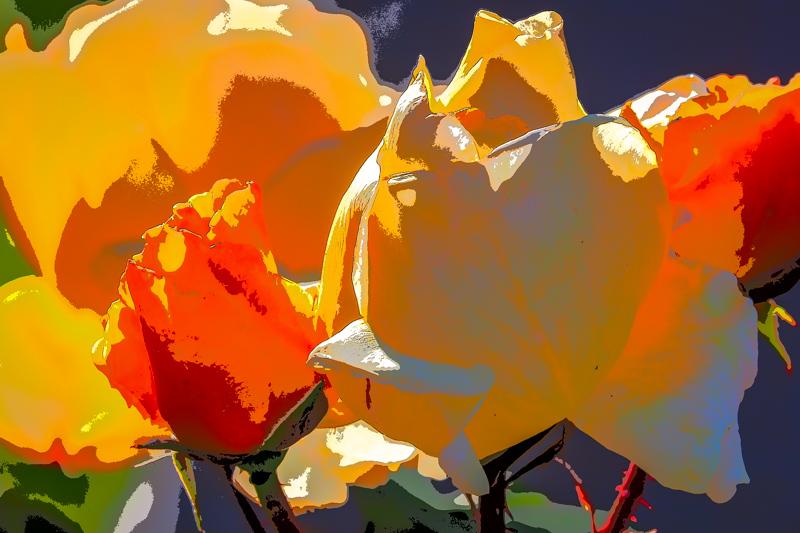 May 26 - Rose garden imagery.jpg