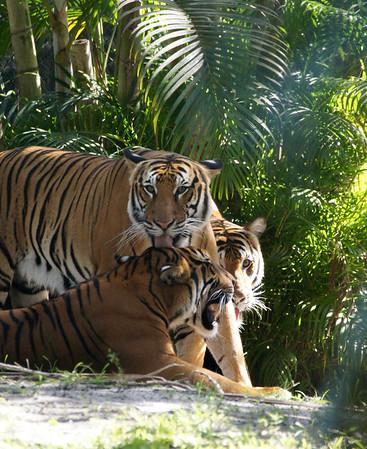 pb zoo 7 7 13