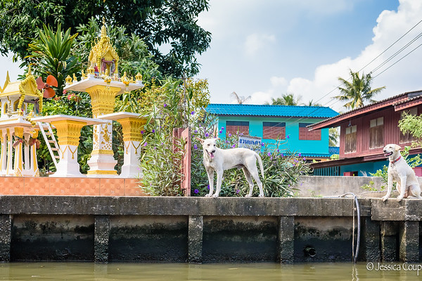 Shrines, Temples and the Grand Palace of Bangkok