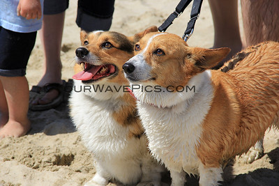 So Cal Corgi Beach Day @ HB Dog Beach  4/11/15