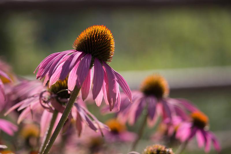 KoRedfield-Floral67.jpg