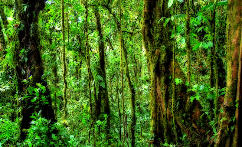 Green Solitude* green, rainforest, Costa Rica, trees