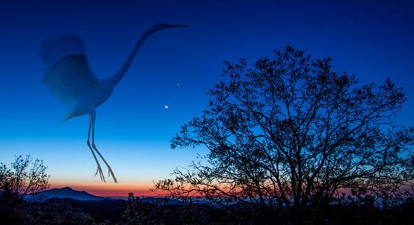 egret sunset