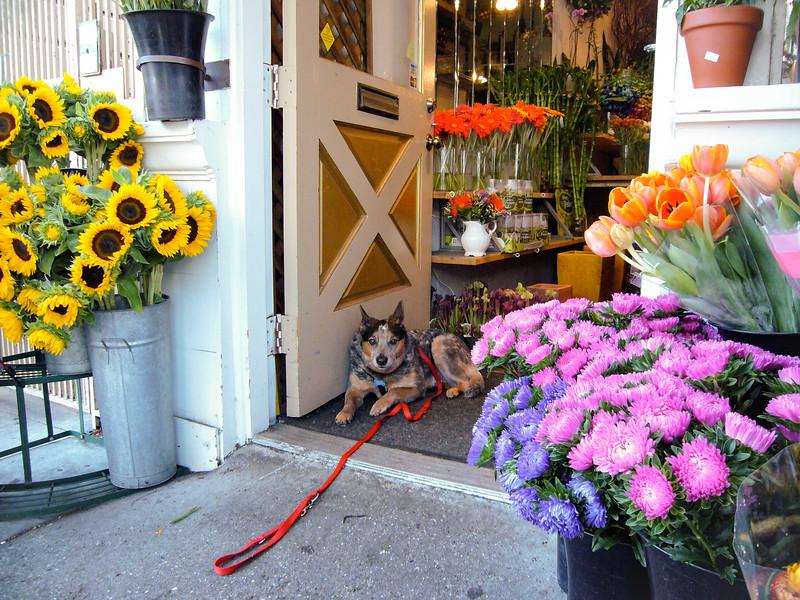 Flower Shop Dog