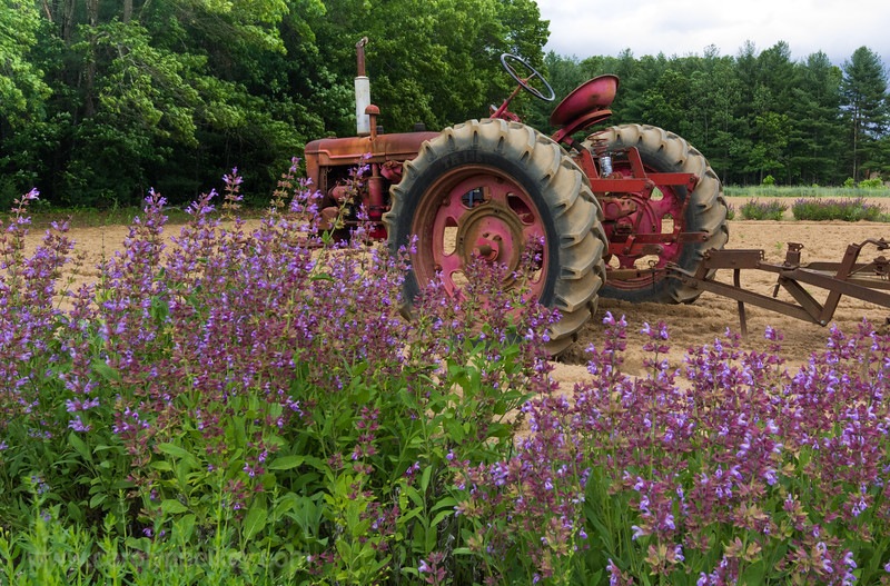 Purple Weeds and Tractor