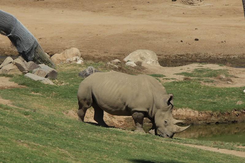 San Diego wild animal pakr 201700044.jpg
