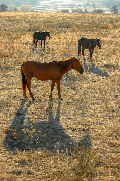 Wild Horse Group #3