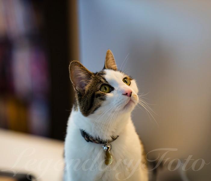 Cats_Bugatti_2.jpg