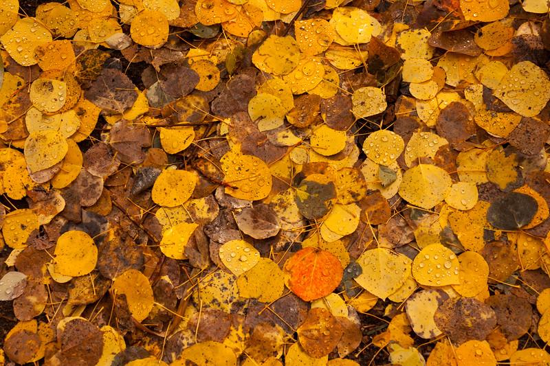 Fern Lake Leaves