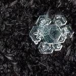 snowflakes-1599.jpg