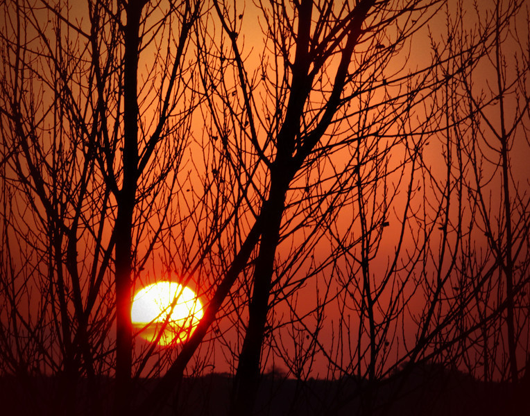 sunset in tree 1.jpg