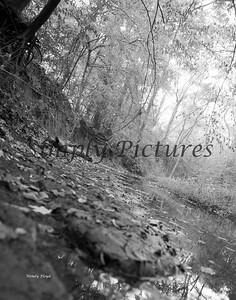 Banita Creek089 B&W