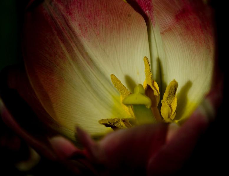 flower8531.jpg