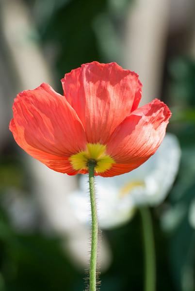 Brookgreen Flowers 2010