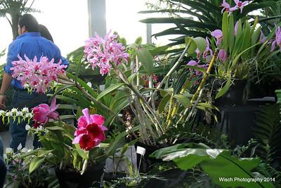 WinterCarnival Orchid Show Jan2014