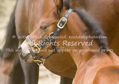 Horses General