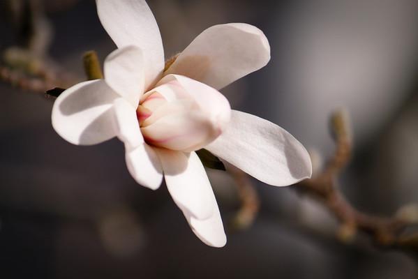 Spring Flowers 2013