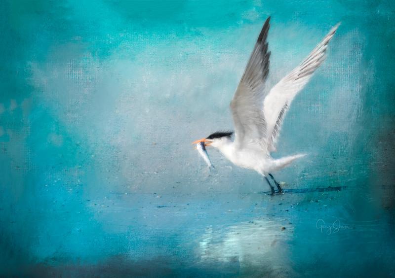 Tern Painting WS.jpg