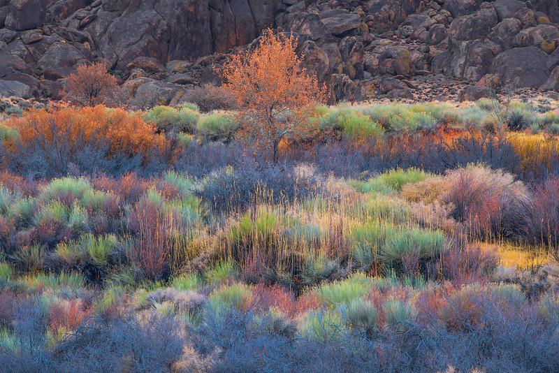 Cali Grass 1 copy.jpg