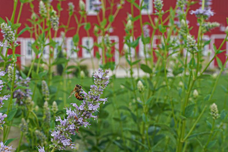 Arboretum, July Harvest-77.JPG