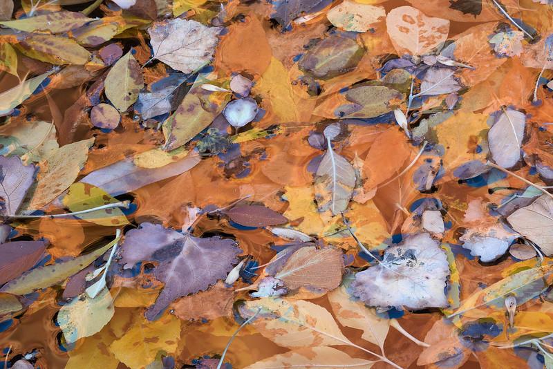 Leaf Splatter