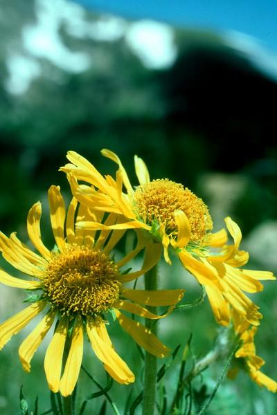 amh FLOWERS (1295).jpg