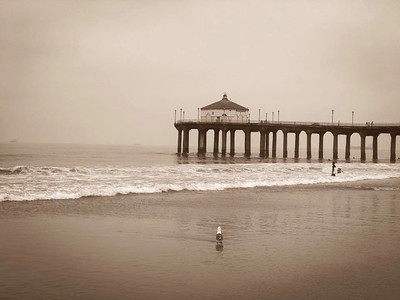 A bird, the ocean, the Manhattan Beach Pier and overcast skies in the morning