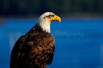 Alaska/Wildlife