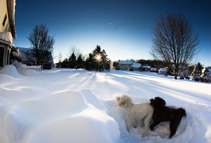 snowfall-03526.jpg