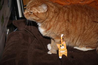 My Cat, Lucky, My House, Dutch Hill, Tamaqua (1-29-2012)